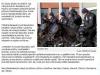 (opavsky.denik.cz 11/2011)